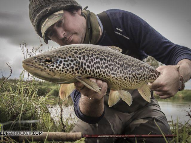 Liffey predator in the net